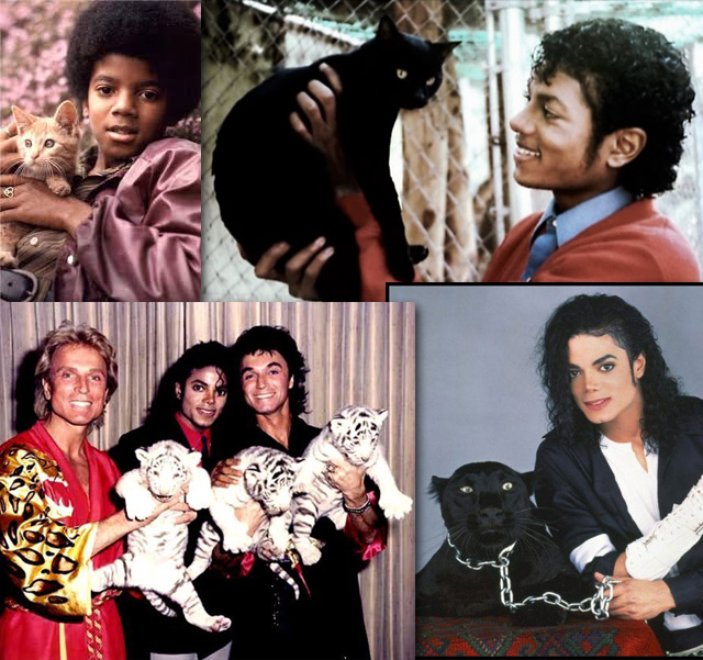 Michael Jackson loved cats or did he exploit them