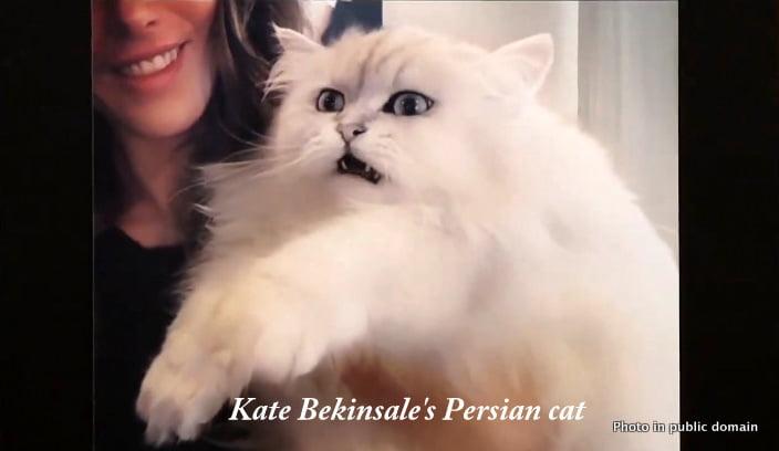 Kate's Persian cat