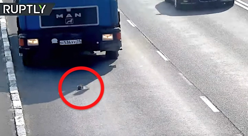 Kitten on Russian highway