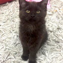 Little devil cat turned into an angel