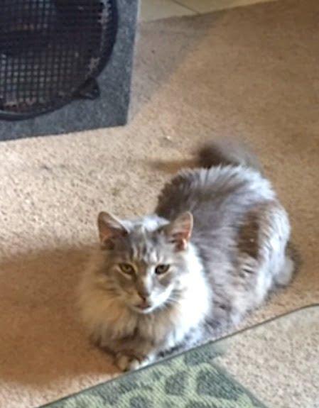Max a stolen cat!