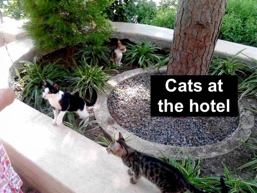 PALOMA Foresta Resort stray cats