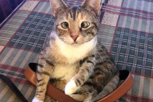 cat accused of biting