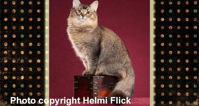 Ragamoli cat
