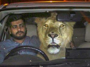 Simba and Hamzah Hussain