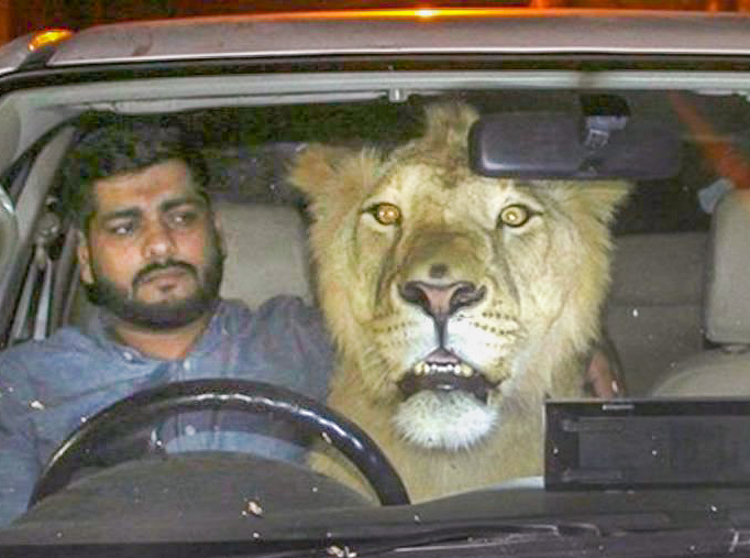 Simba and Hamzah Hussain in car in Karachi. Photo: IRFAN CHOUDARY/BARCROFT IMAGES.
