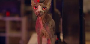 Sphynx cat features in film Pet Graveyard