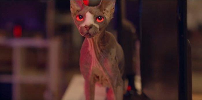 Sphynx cat features in film Pet Graveyard