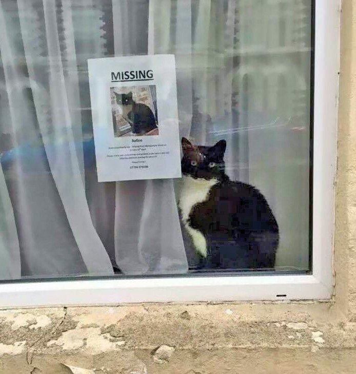 The least missing cat