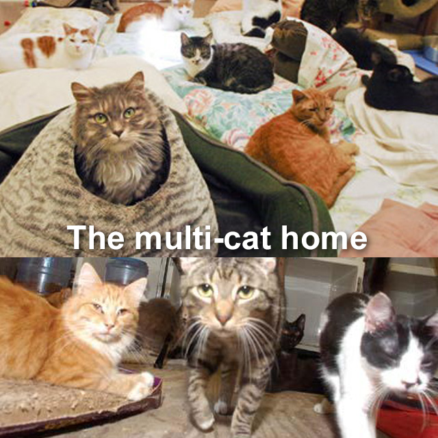 The multi-cat home. These ones look okay