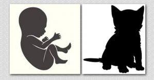 Baby life versus kitten life