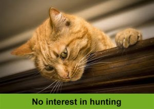 Breeding cats who have no interest in hunting