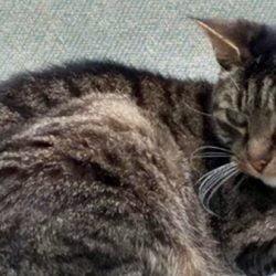 cat euthanized