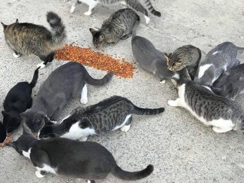 feral cats killed
