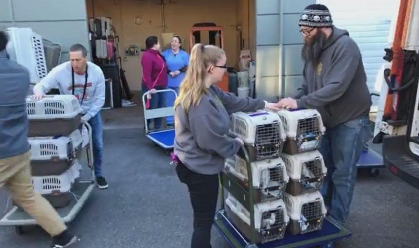 Alabama pets arrive