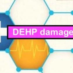DEHP damages sperm?!