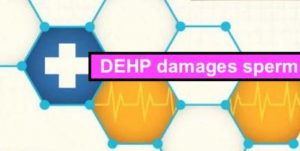 DEHP damages sperm?!