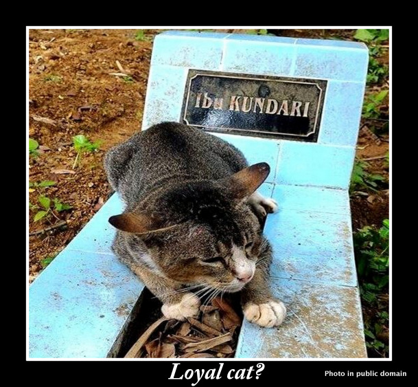Loyal cat