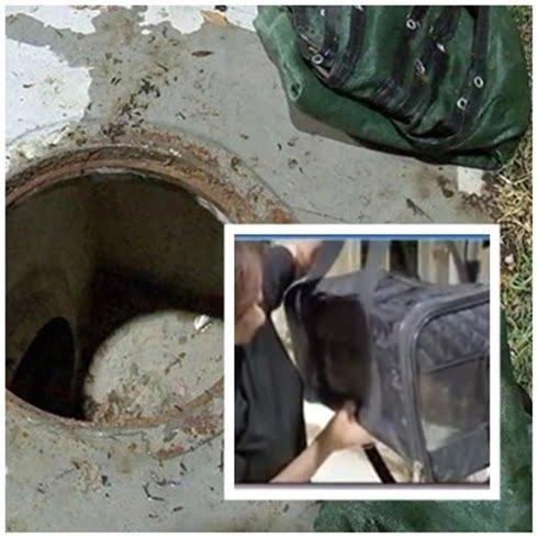 cat rescued manhole