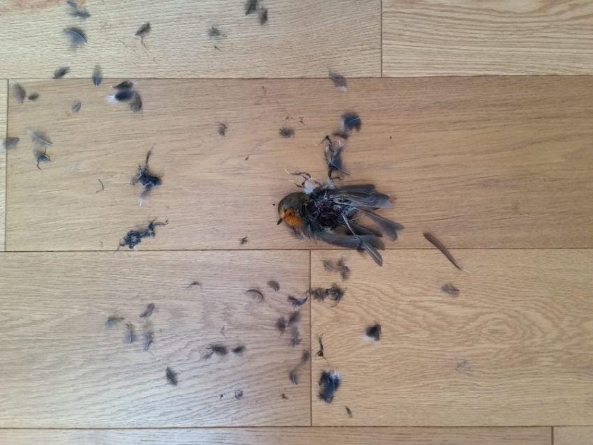 Gabriel the hunter kills robin at night