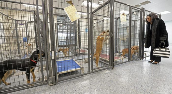 CAA animal shelter at Baton Rouge embroiled in scandalous accusations