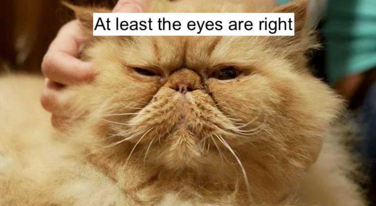 'Cat look'