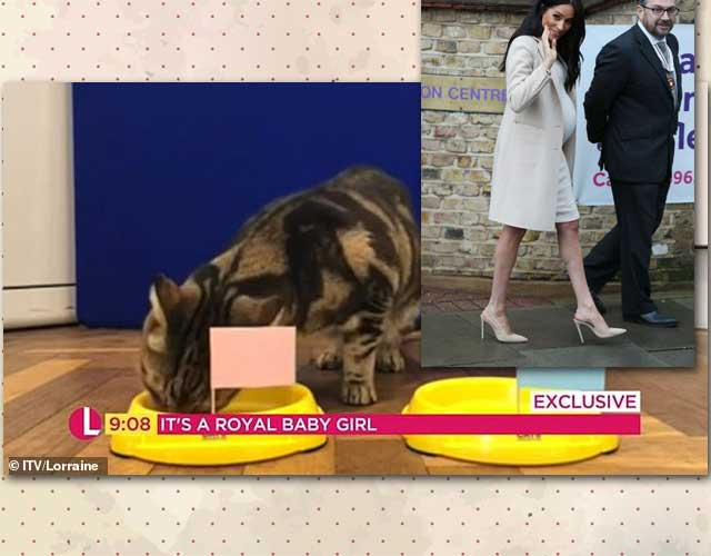Psychic cat predicts a girl for Meghan