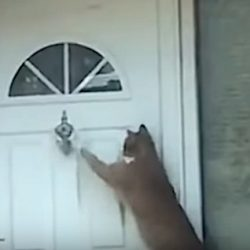 Cats use front door knocker