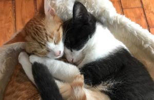 Couple move in together and their cats get along great