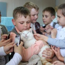 Extraordinary photo of cat surrounded by children