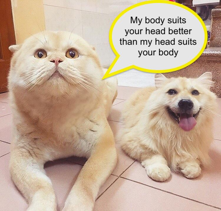 Face swapped cat and dog