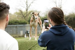 Huawei smartphone used to photograph RSPCA rescue dog