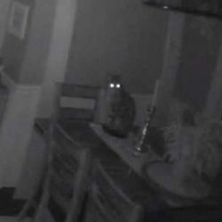 Hunter a stray cat intruder enjoying the house owner's food and security