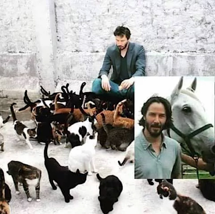 Keanu Reeves kindness towards animals