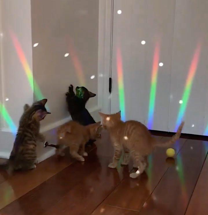 Kitten disco Saturday Night Fever 1