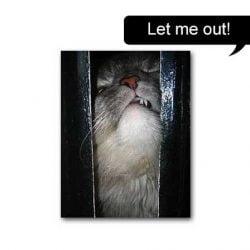 Let me out! Confined cat