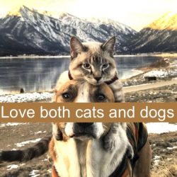 Love cats and dogs equally