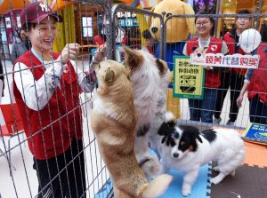 Pet Adoption Day China is a success