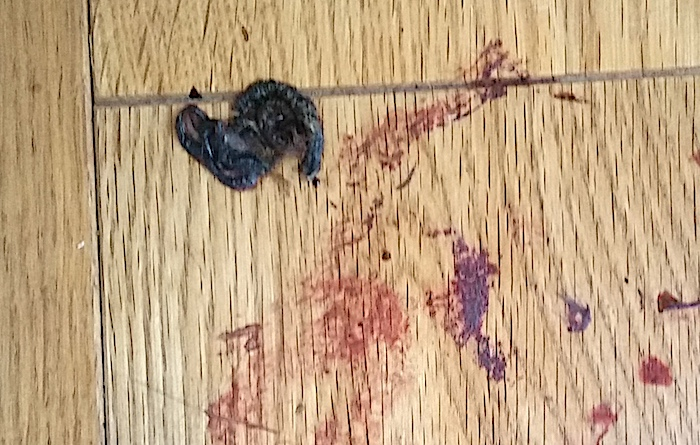 Remains of a mouse eaten over four days