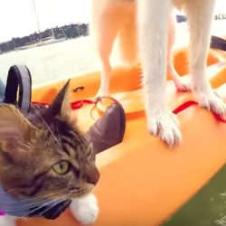 Rosie and Lilo on boat