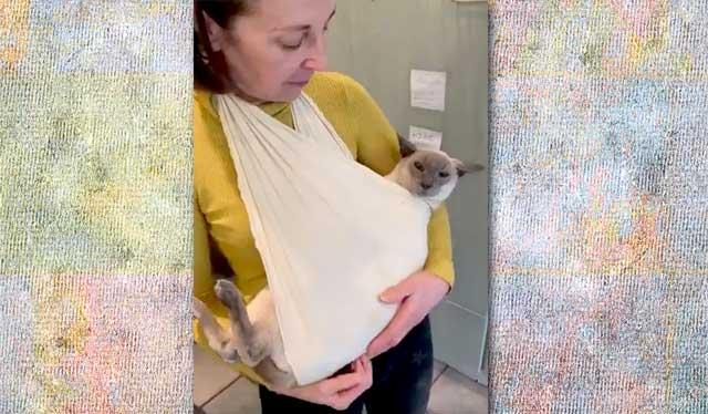 Siamese cat in a sling
