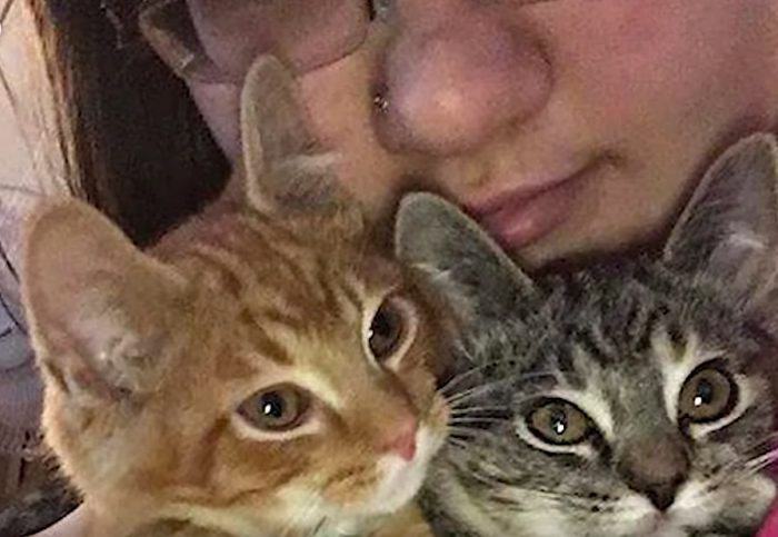 Sibling cats separated at shelter and they cried for each other