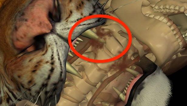 Tiger neck bite