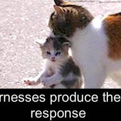 Cat carrying kitten