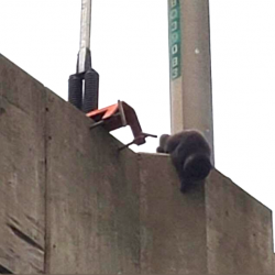 Cat stuck on expressway and school kids help in rescue.