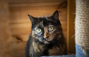 Sophie. Photo: Cats Protection