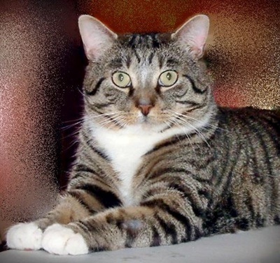 FIV cat