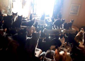 Cat hoarding Armageddon