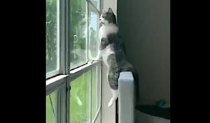 Cat looking out of window
