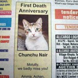 cat remembrance